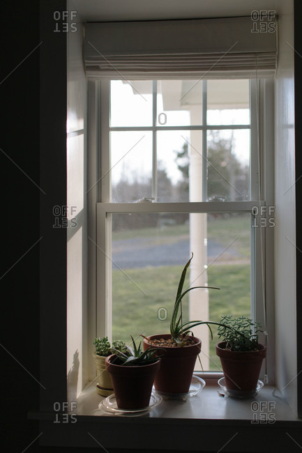 Potted plants in sunlight on a window sill