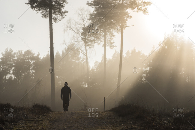 Sweden, Sodermanland, Skeppsvik, Silhouette of man walking in forest at dawn