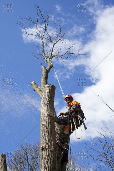 Sweden, Sodermanland, Arborist cutting tree trunk