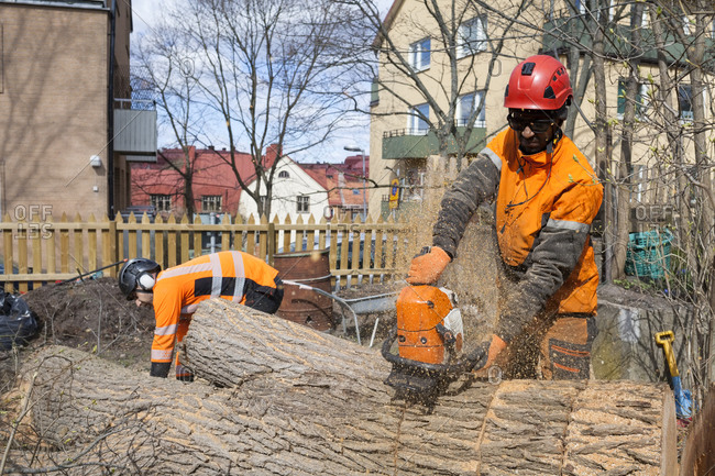 Sweden, Sodermanland, Arborists cutting logs