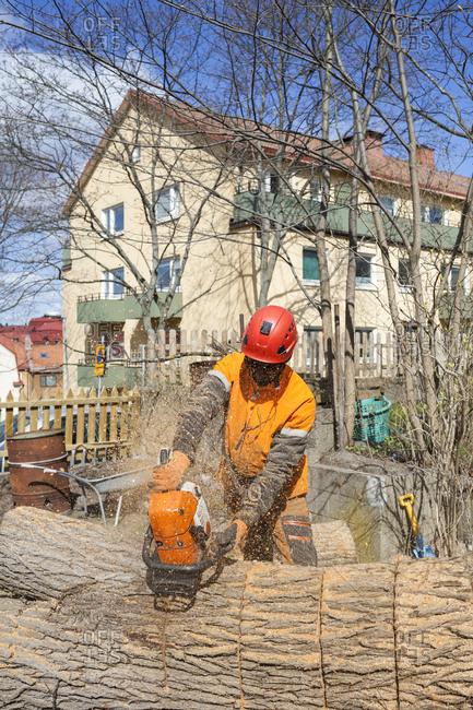 Sweden, Sodermanland, Arborist cutting log