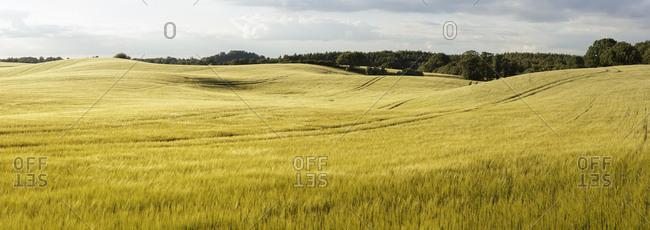 Sweden, Skane, Rockarp, Bramstorp, panoramic view of fields