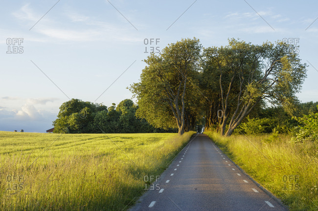 Sweden, Skane, Stenberget, country road in rural scene