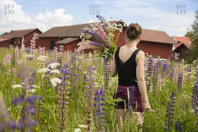 Sweden, Dalarna, Mora, Mid adult woman holding bunch of lupine flowers