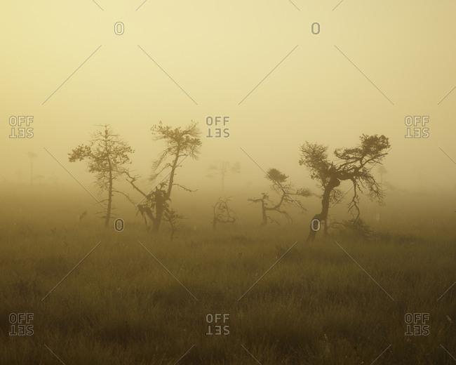 Sweden, Smaland, Store Mosse National Park in fog