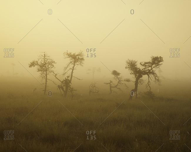 Sweden, Smaland, Store Mosse National Park in fog