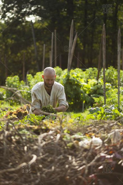Sweden, Skane, Vanga, Man working in garden