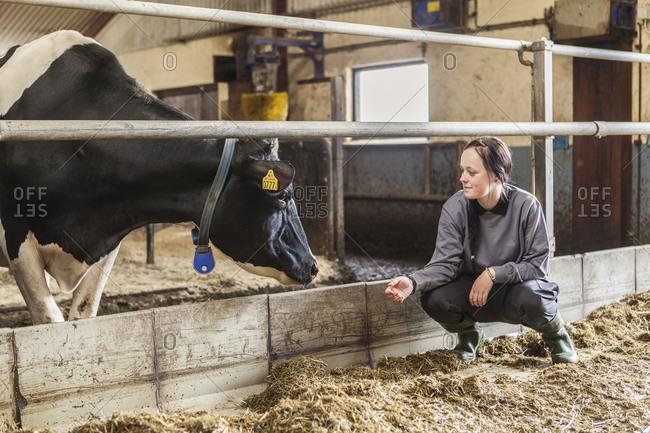 Sweden, Skane, Female dairy farmer at work