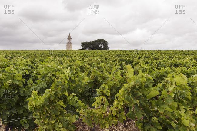 France, Bordeaux, Le Chateau La Tour de By, Vineyard with tower and tree on horizon