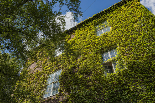 Sweden, Stockholm, Ostermalm, Creeper plant growing on wall of Kungliga Tekniska hogskolan (Royal Institute of Technology)