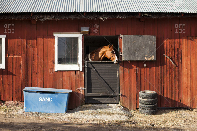 Sweden, Uppland, Faringso, Horse locked in stable