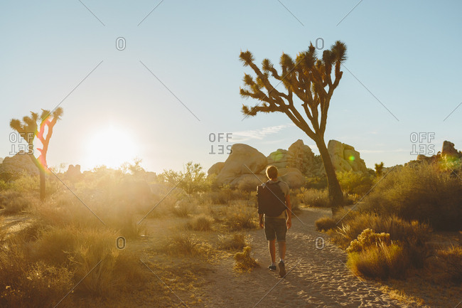 USA, California, Joshua Tree National Park, Man hiking at sunset