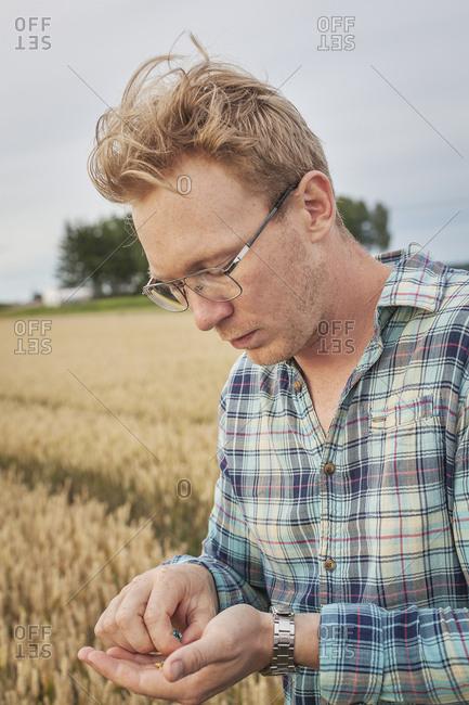Finland, Uusimaa, Siuntio, Mid adult man holding wheat grain