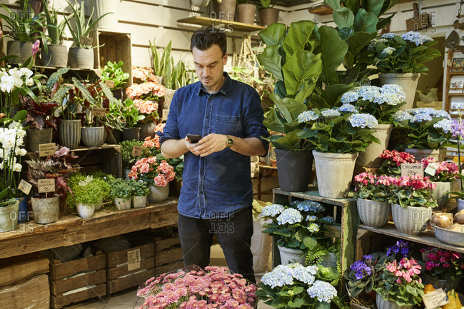Sweden, Florist using smart phone in flower shop