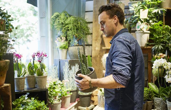 Sweden, Florist working in flower shop