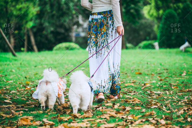 Woman walking the dogs, in Guangzhou, China.