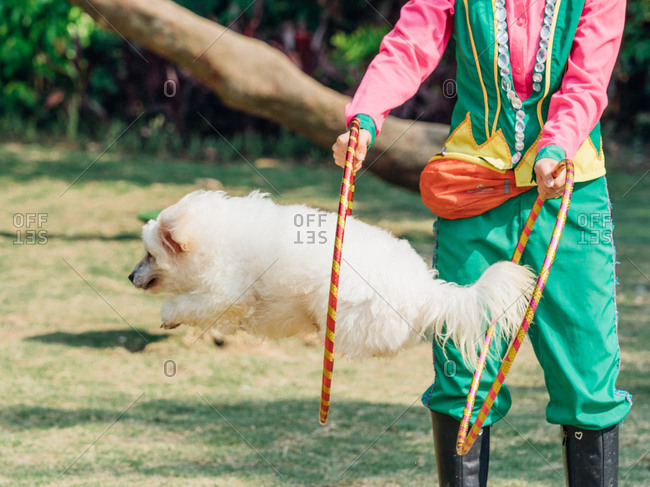 Pet dog jump into ring, in Guangzhou, China.
