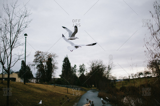 Seagulls flying over a sidewalk