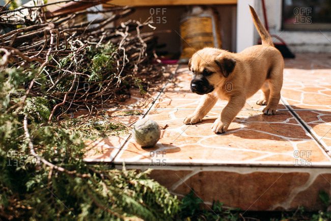 Cute puppy chasing a ball on a stone patio.