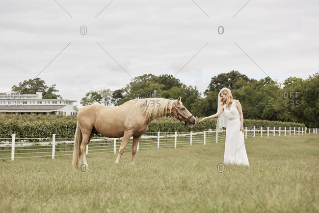 Bride reaching out to horse on farm