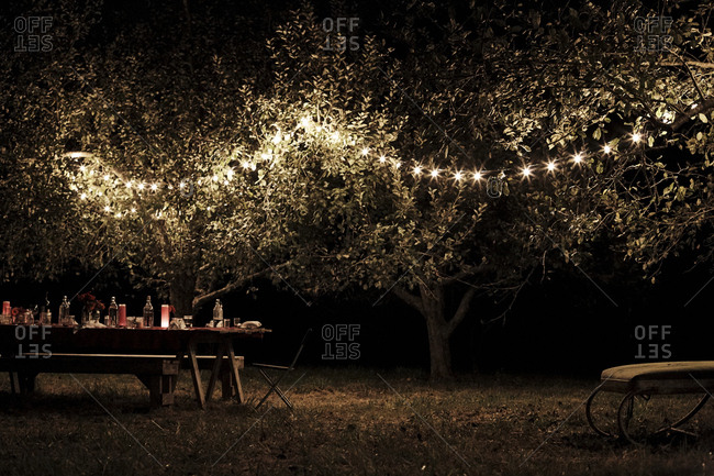 String of lights in trees above dining table on farm