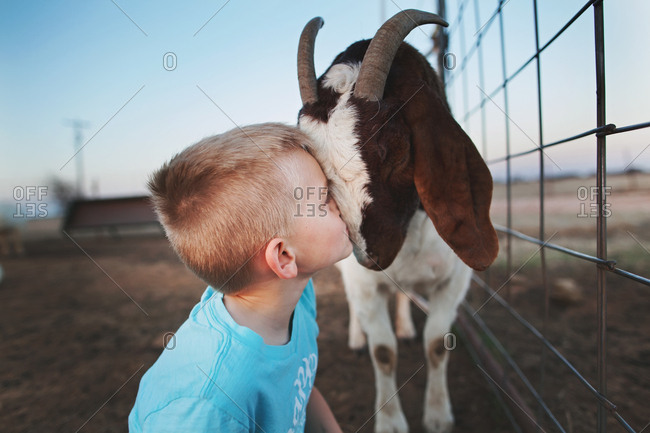 Boy pressing his face against a goat in a pen