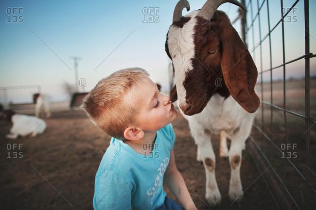 Boy kissing a goat in a pen