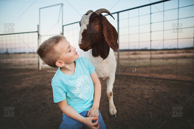 Boy looking at a goat in a pen