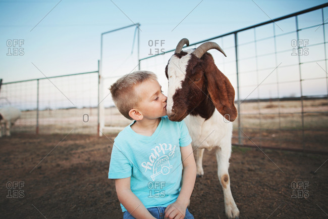 Boy with a goat in a pen