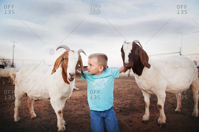 Boy petting two goats in a pen