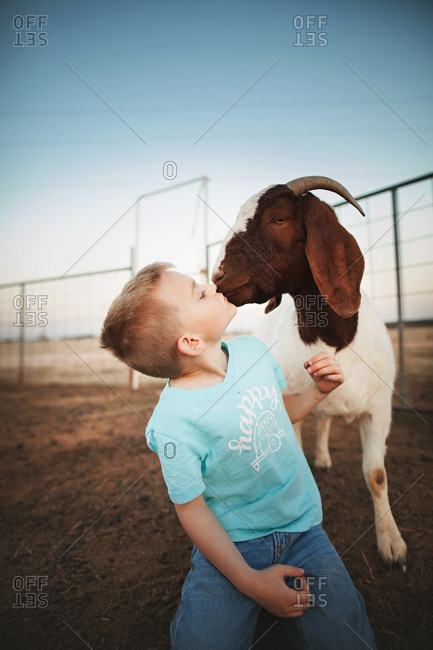 Boy getting a kiss from a goat in a pen