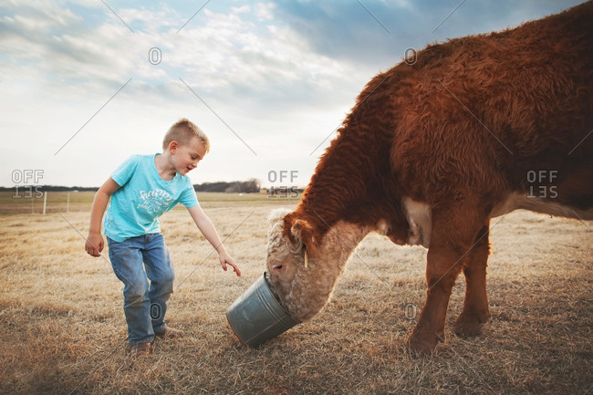 Boy feeding a cow out of a bucket