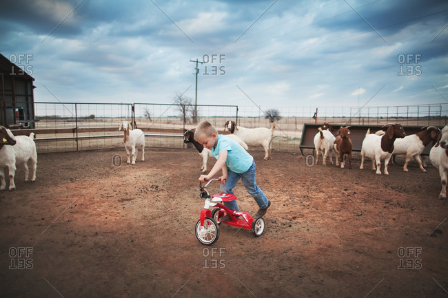 Boy riding tricycle in a goat pen