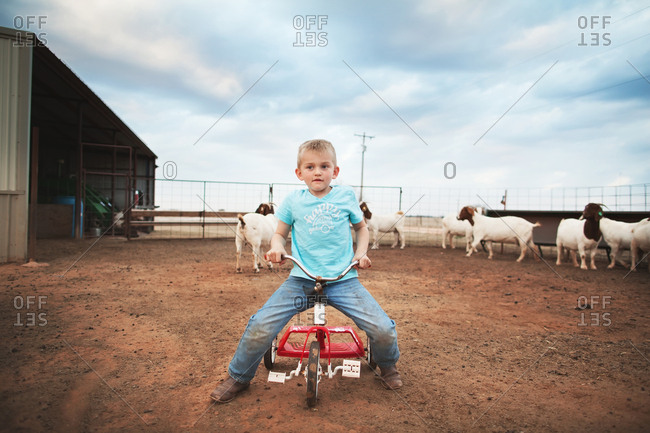 Boy sitting on tricycle in a goat pen
