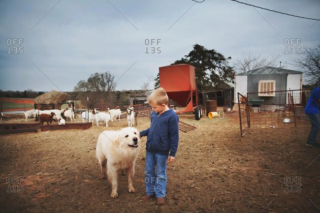 Boy petting a big white dog