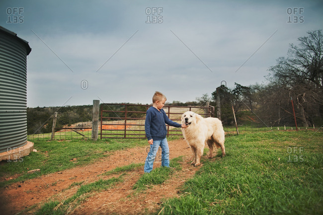 Boy petting a big dog on a farm