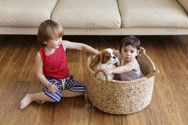 Toddler girl sitting in a basket with dog while her brother sitting on the floor besides