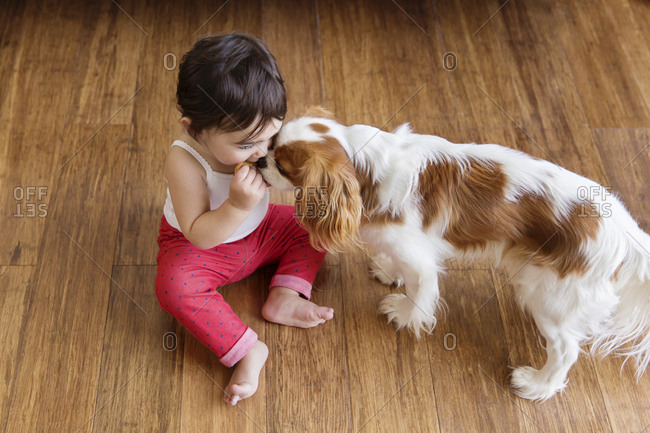 Toddler girl sitting on wooden floor sharing cookie with the dog