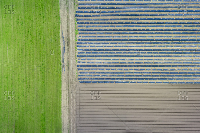 Asparagus and lettuce fields - aerial view