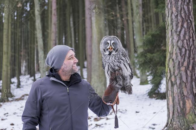 Czechia - Falconer holding great grey owl - Strix nebulosa in forest