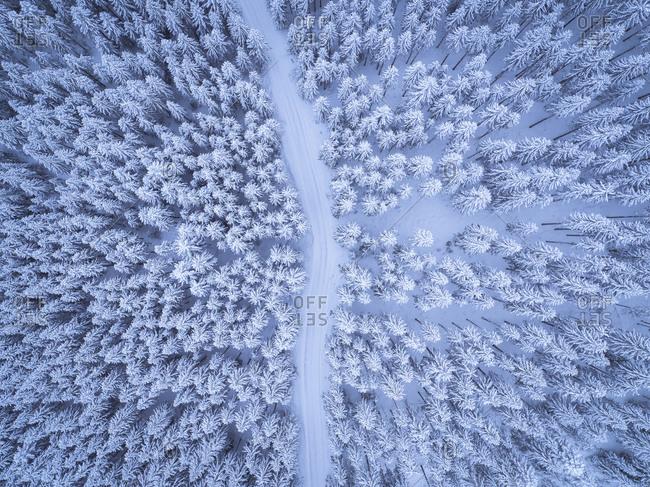 Austria - Gosau - aerial view of road through coniferous forest in winter