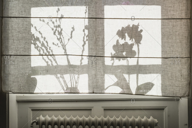 Silhouettes of plants behind curtain