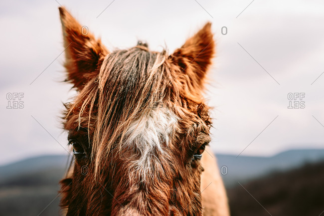 Close-up portrait of horse's face with hills in background