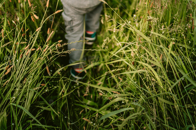 Child walking on path through tall grass