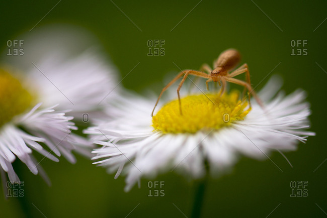 A spider on a flower
