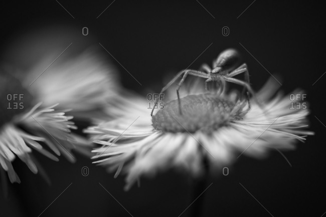 A spider on flower
