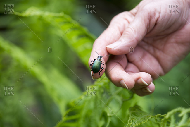 Green beetle on a hand