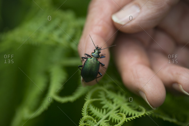 A green beetle on a hand