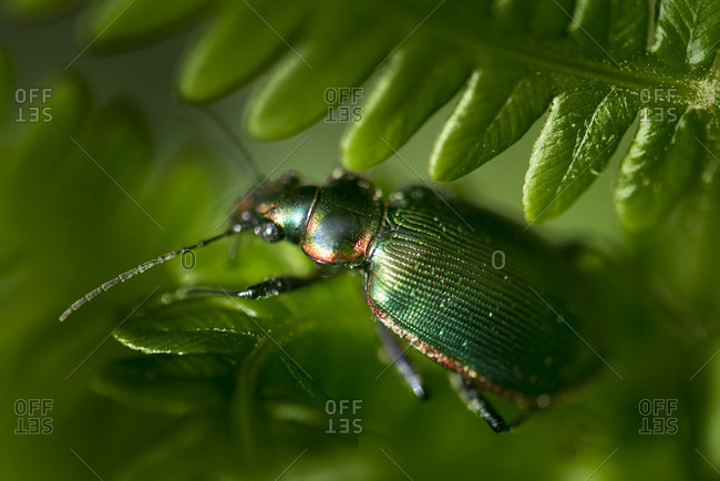 Green beetle on plant