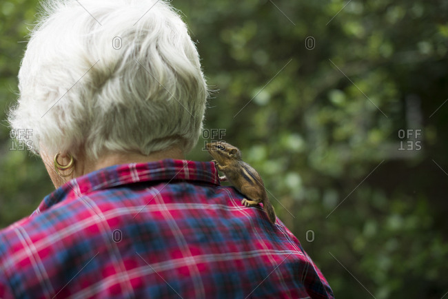 Chipmunk standing on a woman's shoulder